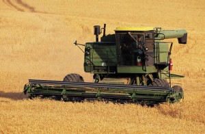 Wheat combine on farm